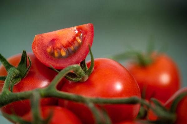 Prodejna na skleníku - rajčata